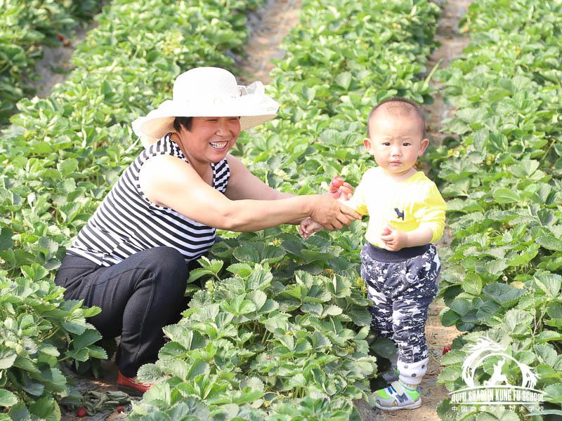 006_Picking_Strawberries