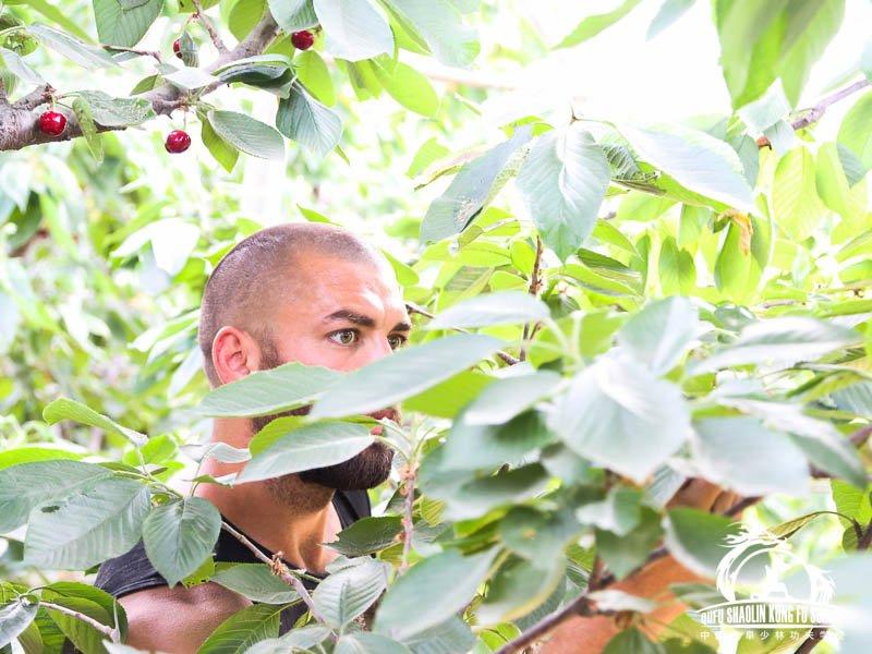 014_Picking_Cherrys