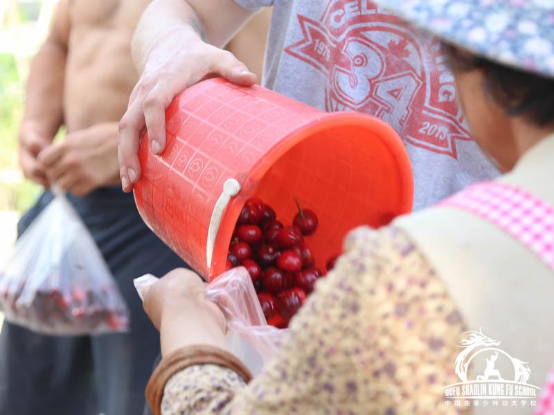 017_Picking_Cherrys