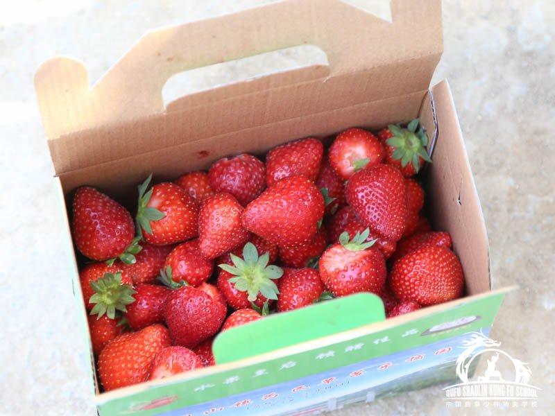 017_Picking_Strawberries