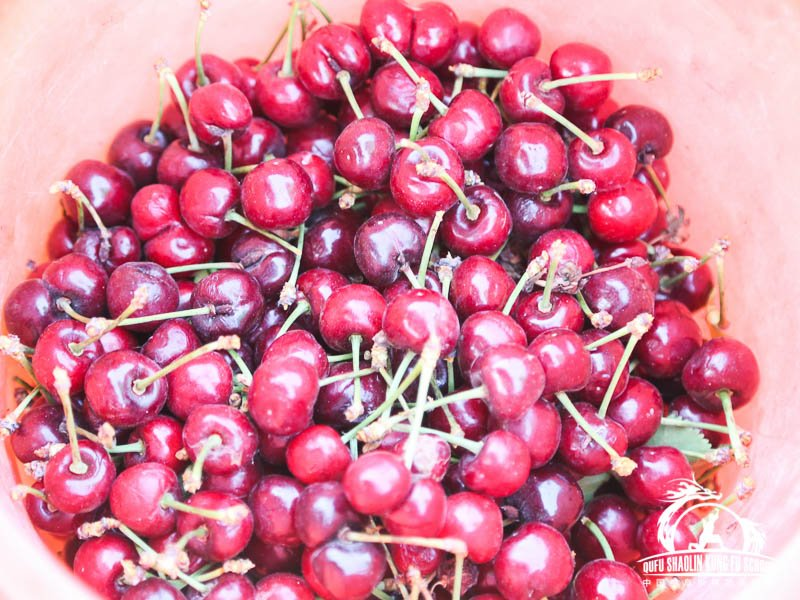 018_Picking_Cherrys